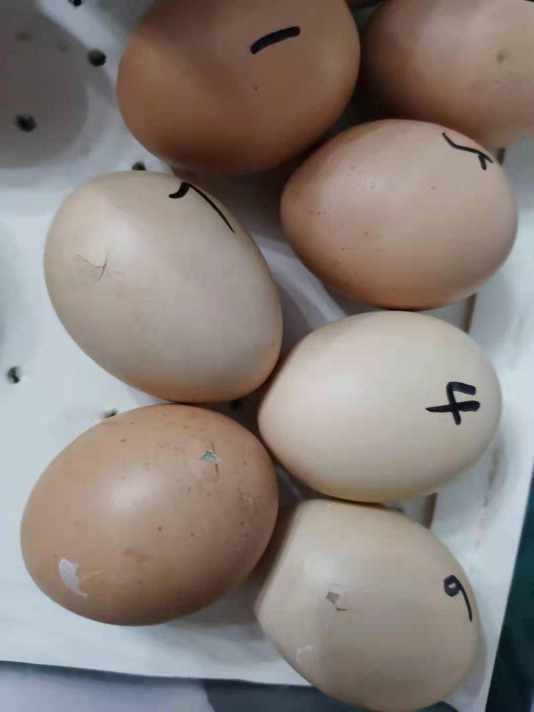 孵蛋记-余庆堂